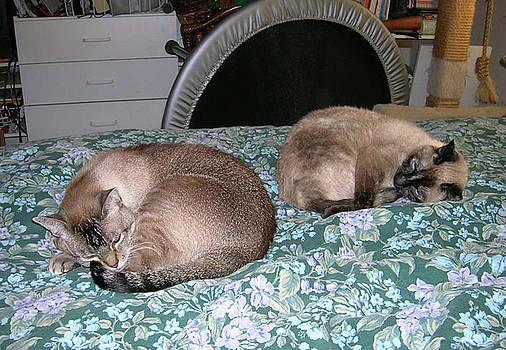 Dos Gatos by Carolyn Donnell