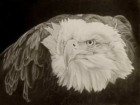 Eagle by Karen E Marvel