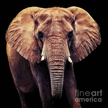 Angela Doelling AD DESIGN Photo and PhotoArt - Elephant