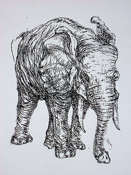 Elephant by Pete Maier