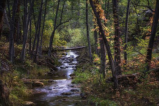 Saija  Lehtonen - Fall in the Forest