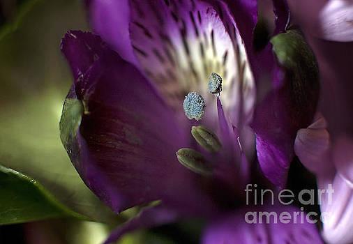 Flower by Angelina Cornidez