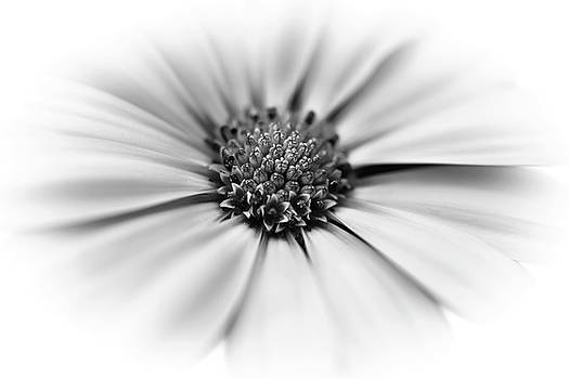 Flower - Black and White by Greg Thiemeyer