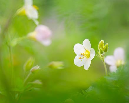 Flowers Whisper Beauty by Sarah-fiona  Helme