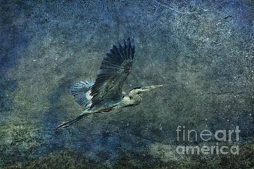 Andrea Kollo - Flying High
