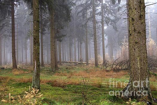 Patricia Hofmeester - Fog in forest