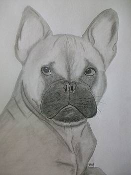 French Bulldog by Kristen Hurley