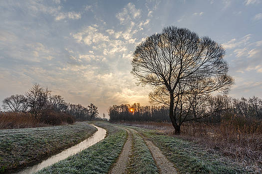 Fresh morning by Davorin Mance