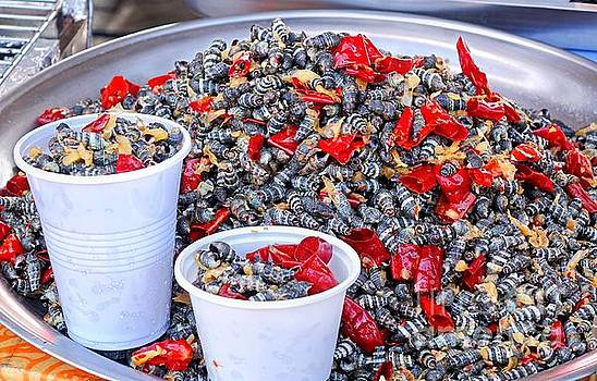 Fried Sea Snails with Chili by Yali Shi