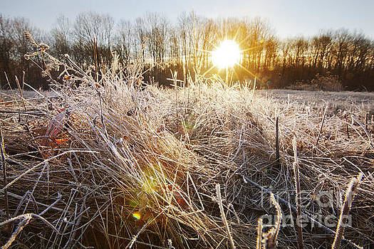Jonathan Welch - Frosty Morning
