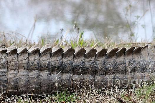 Paulette Thomas - Gator Tail