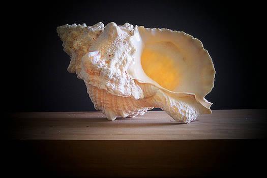Frank Wilson - Giant Frog Shell