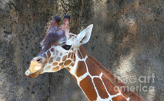 Giraffe by Ken Keener