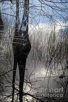 Glades 4 by Richard Smukler