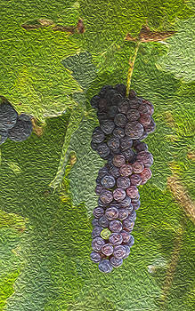 Grape Fruit by Jessica Nguyen