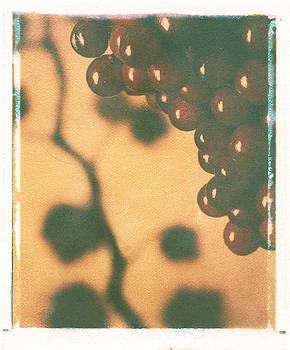 Grapes by Jim Wright