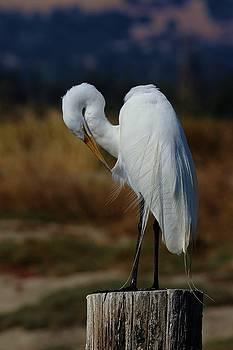 Great Egret by Elka Lange