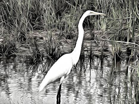 Great Egret by Maciej Froncisz