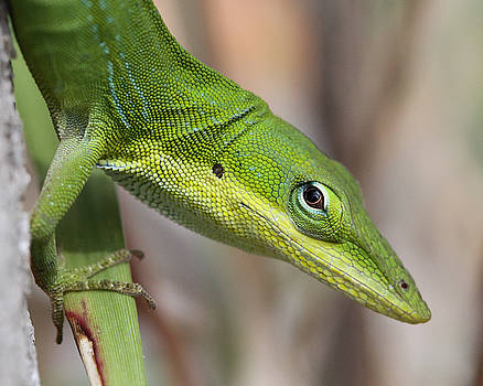 Green Beauty by Doris Potter