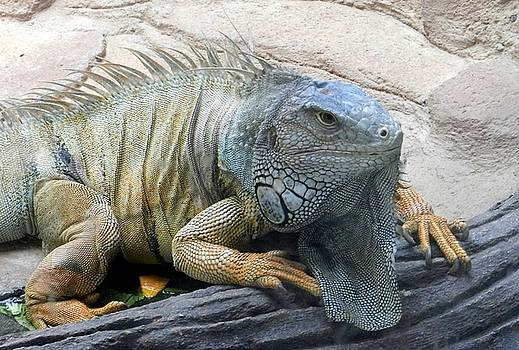 Green Iguana by Sandra Sengstock-Miller