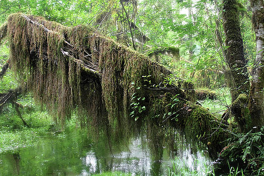 Christine Till - Hall of Mosses - Hoh Rain Forest Olympic National Park WA USA