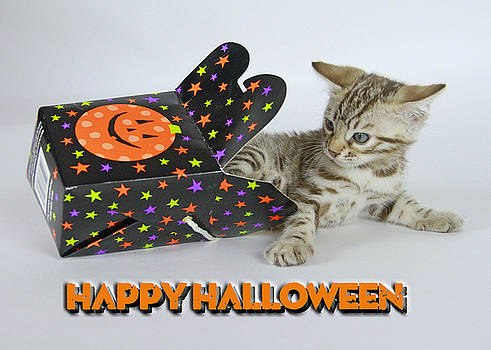 Happy Halloween by Shoal Hollingsworth