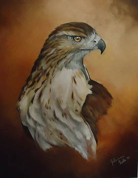 Hawk Study by Julianna Wells