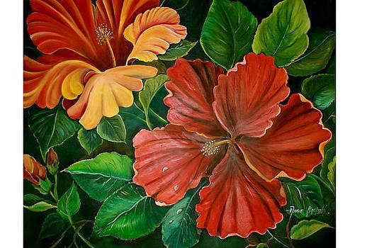 Hibiscus by Ansie Boshoff