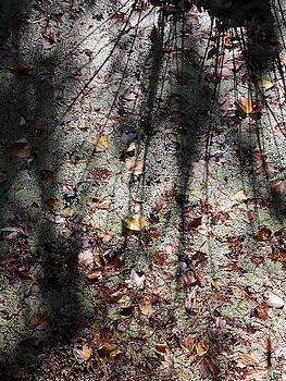 Hidden abstracts by John OBrien