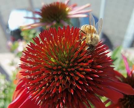 Honeybee-3 by Hatin Josee