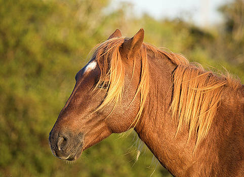 Horse Portrait by Stephanie McDowell