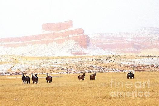 Horses by Carole Martinez