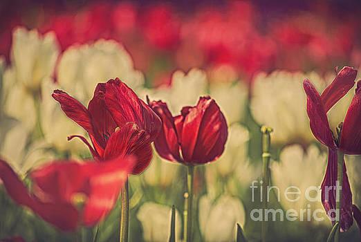In the Garden by Billie-Jo Miller