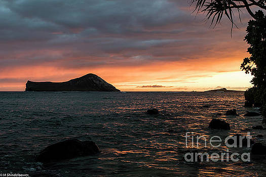 Island Sunrise by Mitch Shindelbower