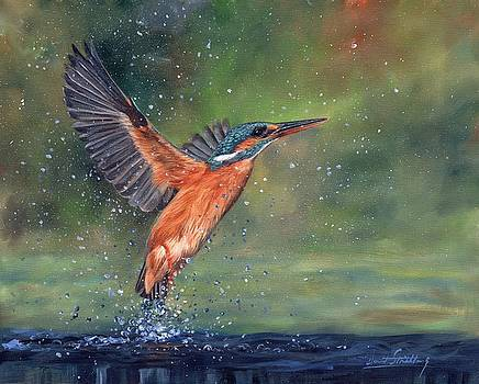 Kingfisher by David Stribbling