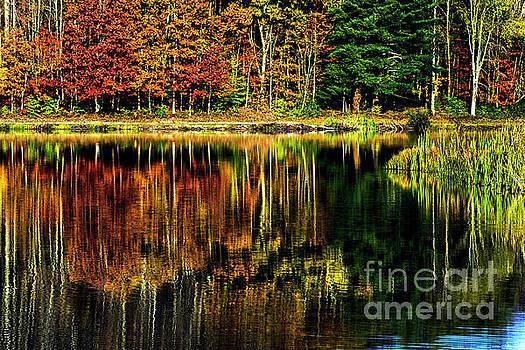 Lake Reflection  by Thomas R Fletcher