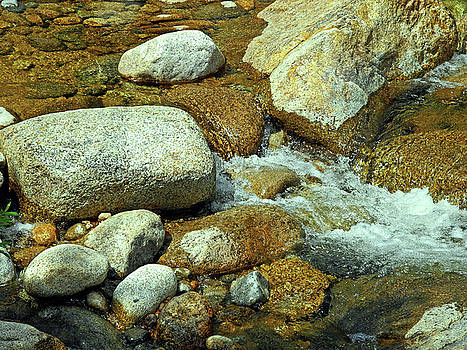 Lynda Lehmann - Life of the Riverbed V2