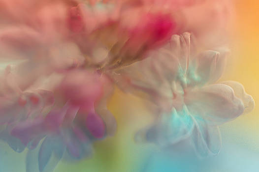 Jenny Rainbow - Lilac Floral Abstract 2. Watercolors Series