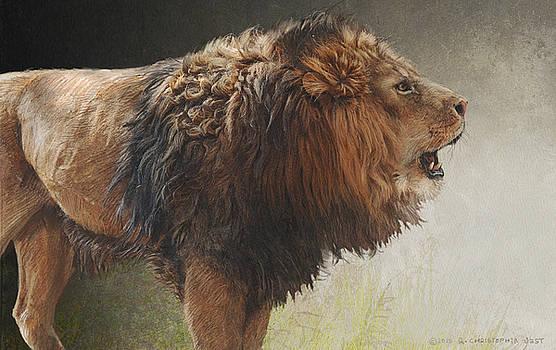 Lion Portrait by R christopher Vest