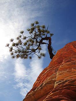Lone Bonsai Tree in Zion by Alan Socolik
