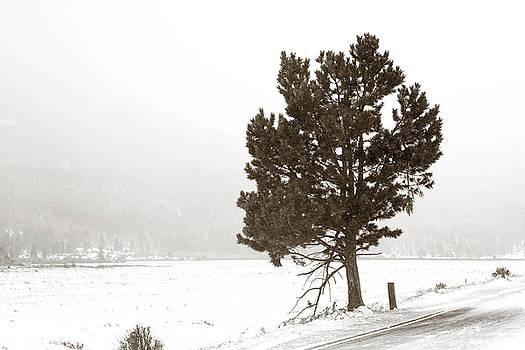 Lone Tree by Marilyn Hunt