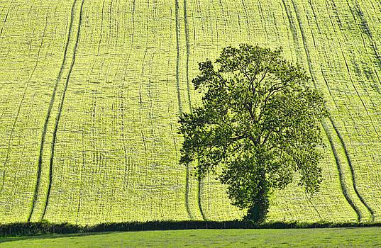 Lone tree by Pete Hemington