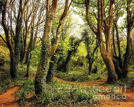 Magic Woods by Edmund Nagele