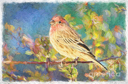 Male Housefinch - Digital Paint by Debbie Portwood