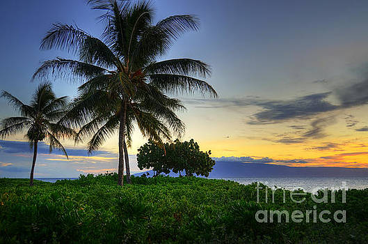 Maui Palm Sunset by Kelly Wade