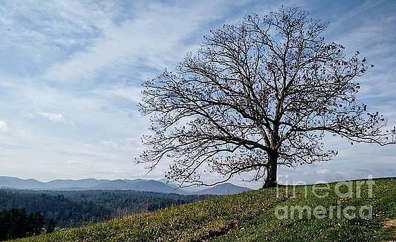 Meadow Oak Tree by Anita Adams