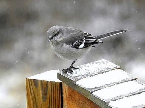Mockingbird  by Brenda Bostic
