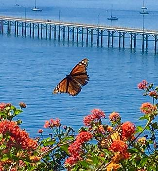 Monarch Butterfly by the Sea by Jan Moore