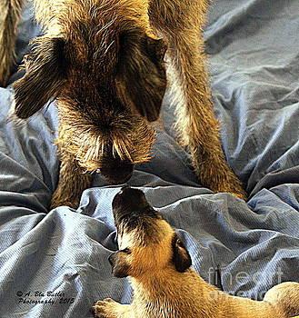 New Friends by Ann Butler