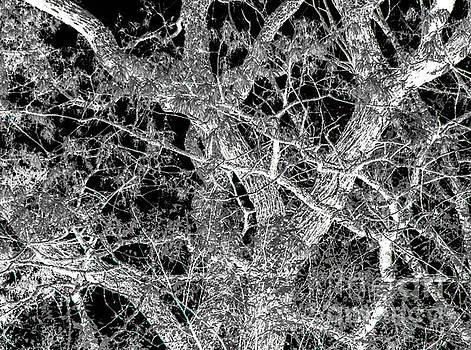 Oak trees by Diane McDougall